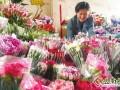 云南:母亲节临近康乃馨售价翻番