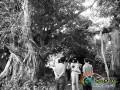 海口5棵300年古树求救 偷砍一棵最高处罚25万元