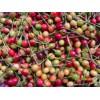 樱花种子,山樱桃种子一吨、大樱桃苗五万、樱花苗五万株