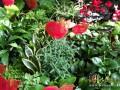 石家庄花卉销售春来早 防辐射净化空气盆栽成首选