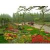 承接园林绿化景观工程设计、施工、养护苗木供应
