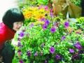 重庆花卉市场春意闹 绿色小盆栽受青睐(图)