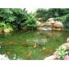 专业承接定做鱼池假山,花园,葡萄架,栏杆,草地